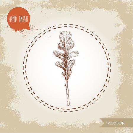 Hand drawn sketch style single arugula leaf. Vector illustration isolated on old vintage background.