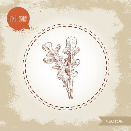Hand drawn sketch style arugula leaves. Vector illustration isolated on old vintage background.