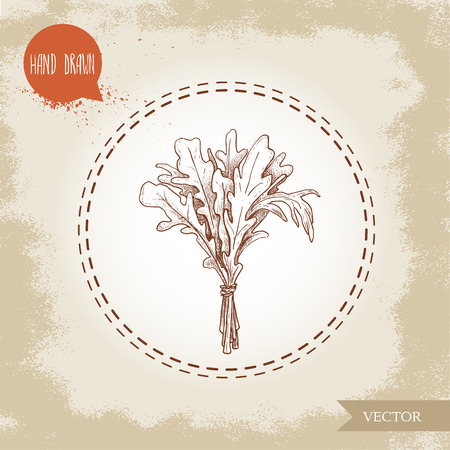 Hand drawn sketch style arugula leaves bunch. Vector illustration isolated on old vintage background. Ilustrace