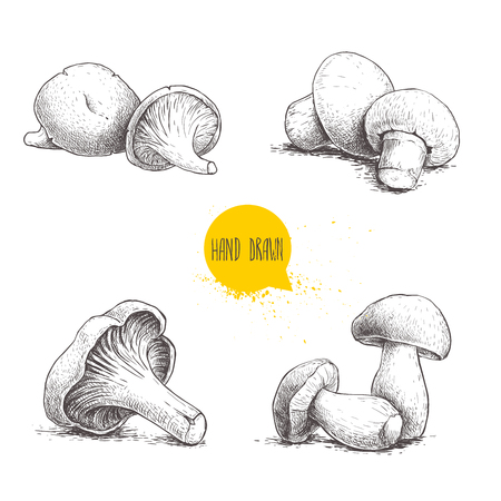 Hand drawn sketch style fresh fram mushrooms compositions set. Champignons, oysters, chanterelles and porcini mushrooms. Organic eco raw food vector illustrations isolated on white background. Illustration