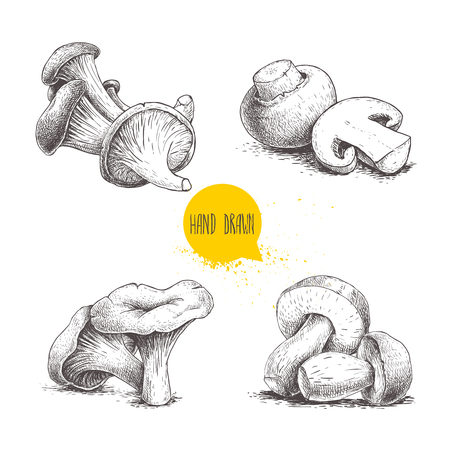 Hand drawn sketch style mushrooms compositions set. Champignons, oysters, chanterelles and porcini mushrooms. Organic forest and farm fresh food vector illustrations isolated on white background. Ilustracja