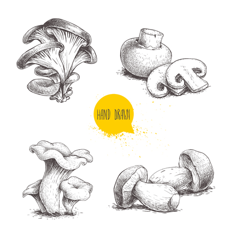 Hand drawn sketch style mushrooms compositions set. Champignon with slices, oysters, chanterelles and porcini mushrooms. Farm fresh food vector illustrations isolated on white background.