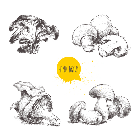 Hand drawn sketch style mushrooms compositions set. Champignon with half, oysters, chanterelles and porcini mushrooms. Organic eco raw food vector illustrations isolated on white background.