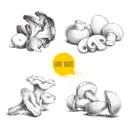 Hand drawn sketch style mushrooms compositions set. Champignon with cuts, oysters, chanterelles and porcini mushrooms. Organic farm and forest food vector illustrations isolated on white background.