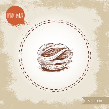 Hand draw sketch style fresh nutmeg mace spice and condiment vector illustration isolated on old background.