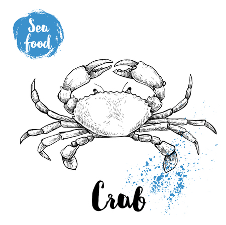 Hand drawn sketch crab with big claws. Seafood vector illustration for menu, restaurants or markets.