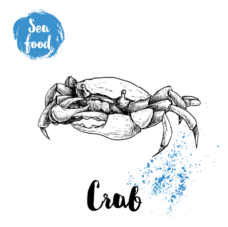 Hand drawn sketch crab. Seafood and wildlife sean and ocean animals vector illustration.