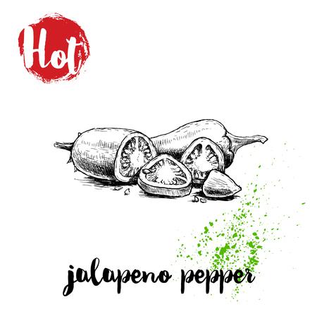 손으로 그린 스케치 스타일 뜨거운 jalapeno 고추 전체 및 잘라 포스터. 핫 기호 빨간색 레이블입니다. 벡터 일러스트 레이 션 흰색 배경에 고립.