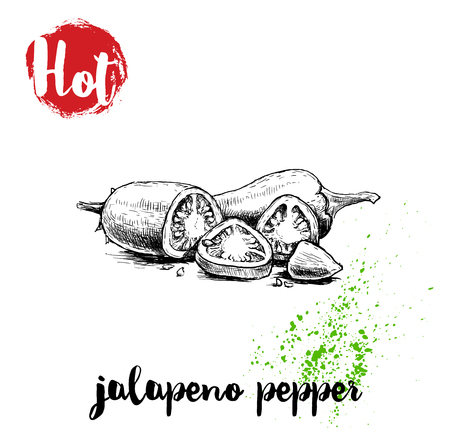 Hand drawn sketch style hot jalapeno pepper whole and cut poster. Red label with hot sign. Vector illustration isolated on white background. Ilustração