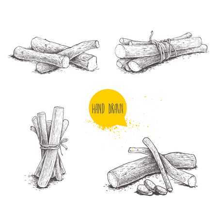 Hand drawn sketch style liquorice roots bunches set. Herbal and aromatic vector illustrations and drawings collection. Isolated on white background. Reklamní fotografie - 93896130