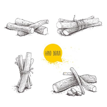 Set di mazzi di radici di liquirizia stile schizzo disegnato a mano. Raccolta di illustrazioni e disegni di erbe e aromatiche vettoriali. Isolato su sfondo bianco Archivio Fotografico - 93896130