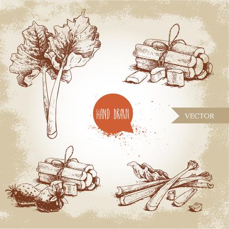 Hand getrokken schets rabarber stijlenset. bladeren, trossen gesneden en geheel met aardbeien samenstelling. Biologisch voedsel component vectorillustratie.