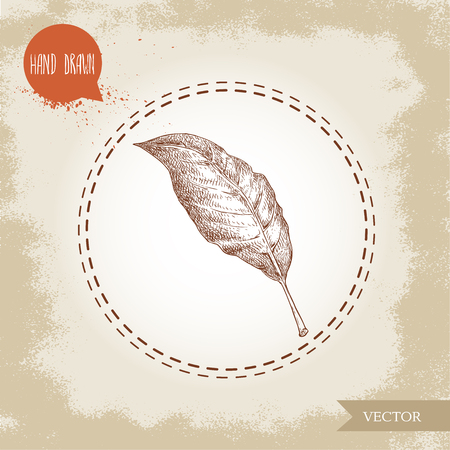 Hand drawn sketch style bay leaf. Spice and condiment vector illustration isolated on old looking background. Иллюстрация