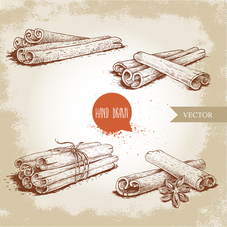 Hand drawn sketch style cinnamon sticks set. Tied with twine, with star anise and bunches. Isolated on vintage background. Vector healthy spice collection.