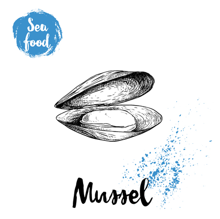 Hand drawn sketch style opened and boiled fresh mussel. Seafood vector illustration poster for fish markets and restaurants menu.