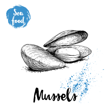 Hand drawn sketch style boiled fresh mussels.