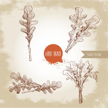 Hand drawn sketch style arugula leaves set. Single leaf and bunches. Fresh salad ecology ingredient vector illustration. Ilustração