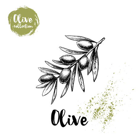 Olive branch poster. Hand drawn sketch style vector illustration for menu design, markets and shops. Ilustração