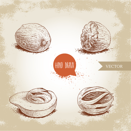 Hand drawn sketch style nutmegs set. Spice and condiment vector illustration isolated on old background. Dried seeds and fresh mace fruits.