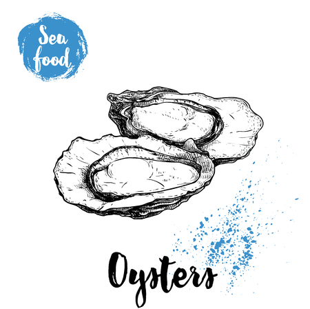 Hand drawn opened oyster, sketch style illustration.