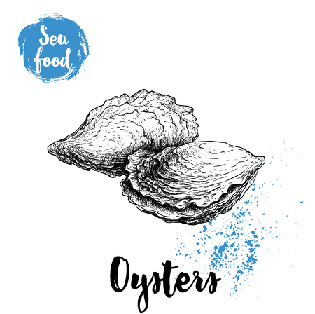 Hand drawn closed oyster, sketch style illustration.