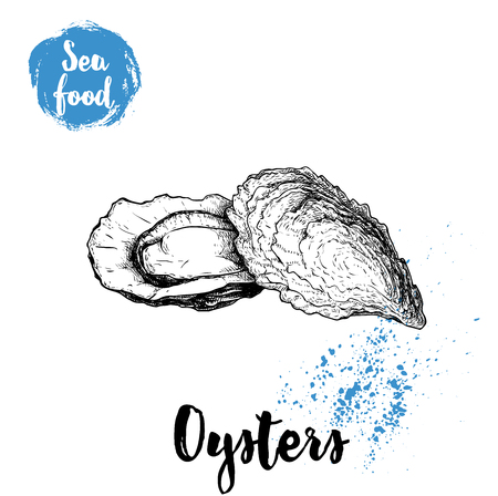 Hand drawn oyster composition, sketch style illustration. 矢量图像