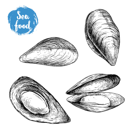 Hand drawn sketch style mussels set. Closed and opened. Sea food and sea animal vector illustration isolated on white background.