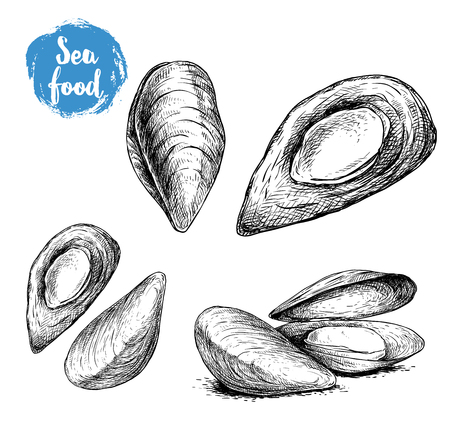 Hand drawn sketch style mussels set. Closed and opened. Fresh and cooked. Sea food vector illustration isolated on white background.  イラスト・ベクター素材