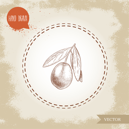 Hand drawn sketch style olive branch. Olive oil and healthy food vector illustration on vintage looking background.