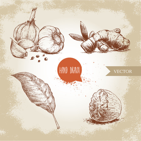 Hand drawn sketch spices set. Garlic composition, ginger root, bay leaf and half of nutmeg. Herbs, condiments and spices vector illustration isolated on old background.