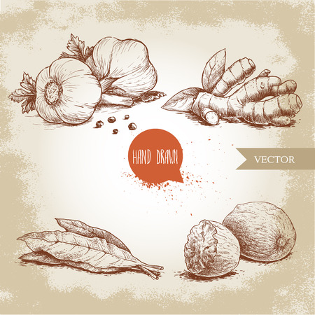 Hand drawn sketch spices set. Garlic composition with parsley, ginger root, bay leaves and nutmegs. Herbs, condiments and spices vector illustration isolated on old background.