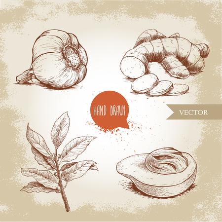 Hand drawn sketch spices set. Garlic, ginger root with cuts, bay leaves branch and nutmeg mace fruit. Herbs, condiments and spices vector illustration isolated on old background. Illustration