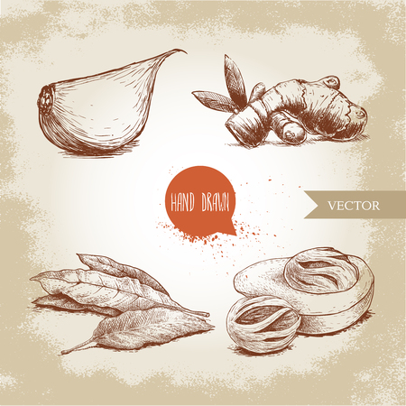 Hand drawn sketch spices set. Garlic clove, ginger root, bay leaves bunch and nutmeg mace fruits. Herbs, condiments and spices vector illustration isolated on old background. Illustration