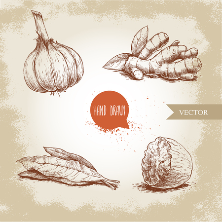 Hand drawn sketch spices set. Garlic, ginger root, bay leaves bunch and nutmeg. Herbs, condiments and spices vector illustration isolated on old background.