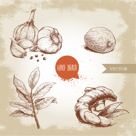 Hand drawn sketch spices set. Garlic composition with black pepper seeds, ginger root, bay leaves branch and nutmeg. Herbs, condiments and spices vector illustration isolated on old background. Imagens - 97387835