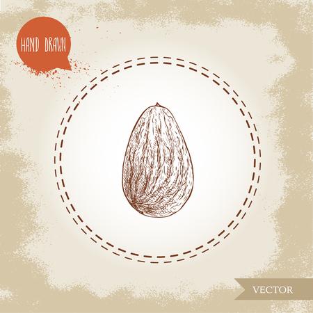 Almond nut kernel sketch. Illustration