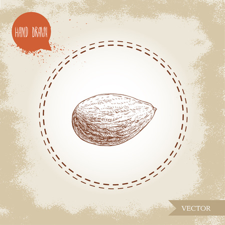 Almond nut seed sketch.