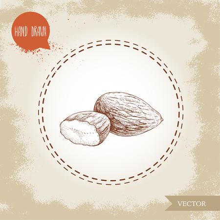 Almond nuts seed group sketch. Archivio Fotografico - 97994833