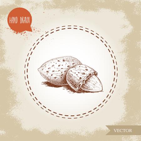 Hand drawn sketch almond nuts.