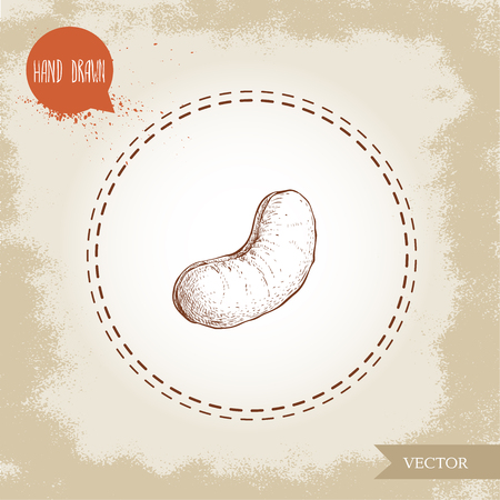 Cashew nut sketch hand drawn. Single roasted nut isolated on old background. Healthy eco food vector illustration.