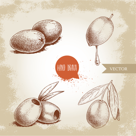 Sketch hand drawn olives set. Bunch, olive fruit with oil drop, boneless olives and olive branch with leaves. Vector illustration isolated on old background. Illustration