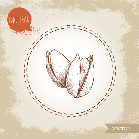Pistachios hand drawn sketch style illustration. Open fried and fresh nuts. Vector illustration isolated on retro background. Illustration