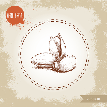Pistachios bunch hand drawn sketch style illustration. Open fried and fresh nuts. Vector illustration isolated on retro background. Illustration