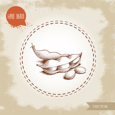 Hand drawn sketch edamame green beans. Soybeans artwork composition, isolated on old background. Ethnic and Japanese health food. Vector illustration.