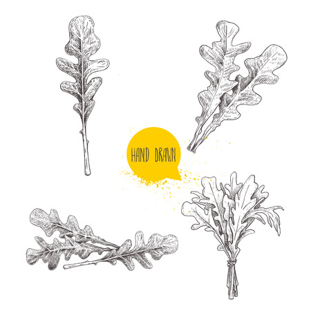Hand drawn sketch style arugula leaves set. Single leaf and bunches. Fresh salad eco ingredient. Vector illustration isolated on white background.