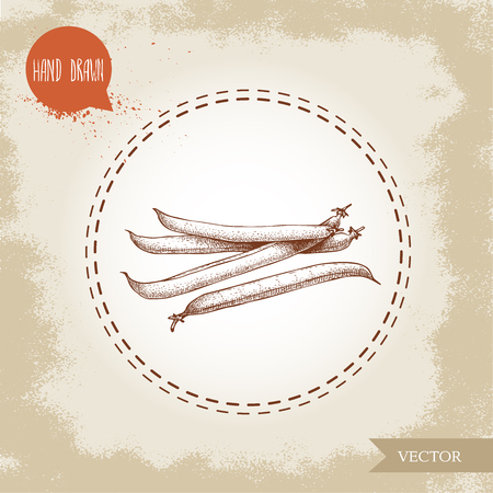 French green beans pods bunch. Sketch hand drawn vector illustration isolated on old looking background. Healthy organic food composition. Banque d'images - 98625938