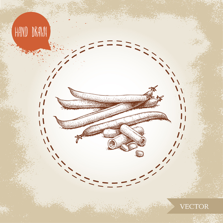 French green beans pods with slices and seeds. Sketch hand drawn vector illustration isolated on old looking background. Healthy organic food composition. Banque d'images - 98625959