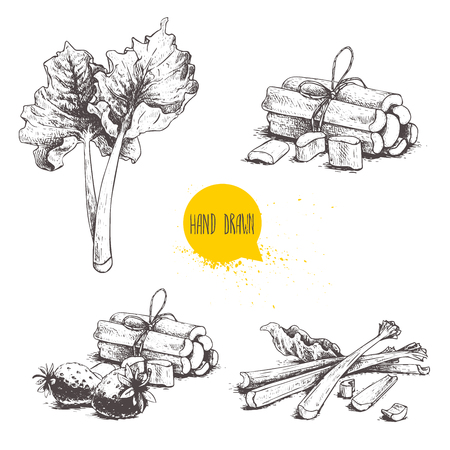 Hand drawn sketch style rhubarb set. leaves, bunches cut and whole with strawberries composition. Stock Illustratie