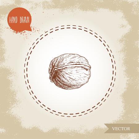 Walnut sketch hand drawn. Eco and super food on vintage background. Vector illustration.