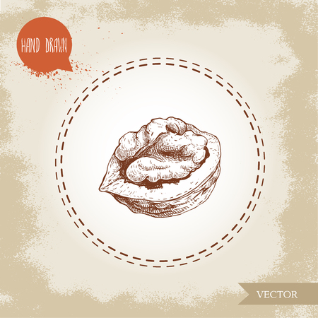 Hand drawn sketch style cracked walnut. Eco food ingredient vector illustration isolated on old looking background.